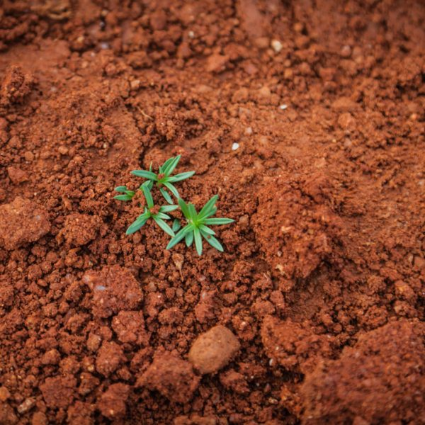 Can Dirt Make You Happy? According to University of Colorado, It Can!