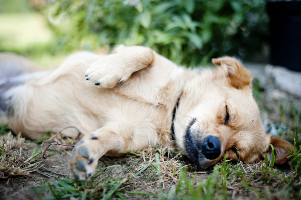 fulvic and humic acid for dog health-supplement