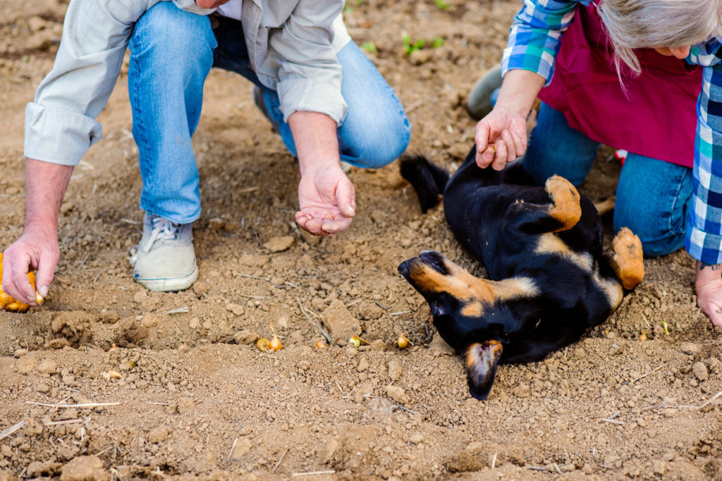fulvic acid for dogs - dirt compounds can help your dog