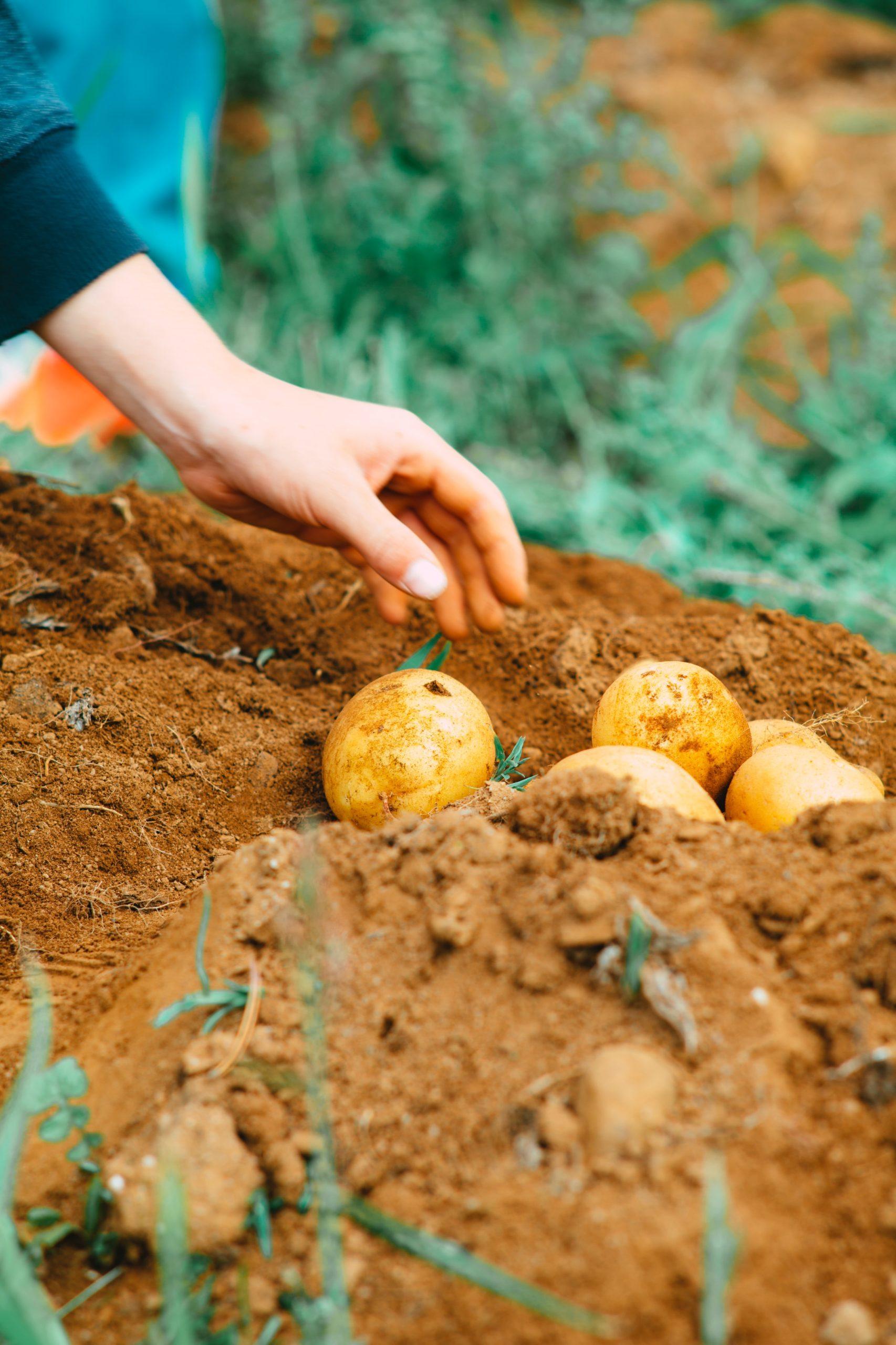 best soil based probiotics